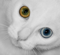 """The Wall Eyed Cat""  courtesy of njaj/ FreeDigitalPhotos.net"