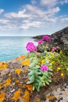 """Pink Flowers Growing On Rock"" courtesy of Evgeni Dinev/ FreeDigitalPhotos.net"