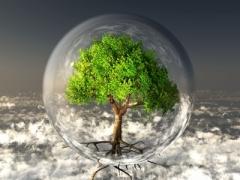"""Tree In Bubble"" courtesy of njaj/ FreeDigitalPhotos.net"