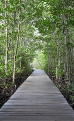 """Wooden Path Walk To Tropical Forest"" courtesy of Keerati / FreeDigitalPhotos.net"
