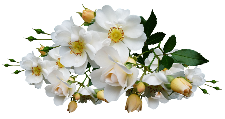 flower-3083094_1920.png