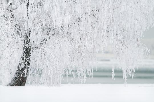 winter-1367153_1920.jpg