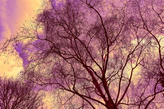 tree-3291659_1920.jpg